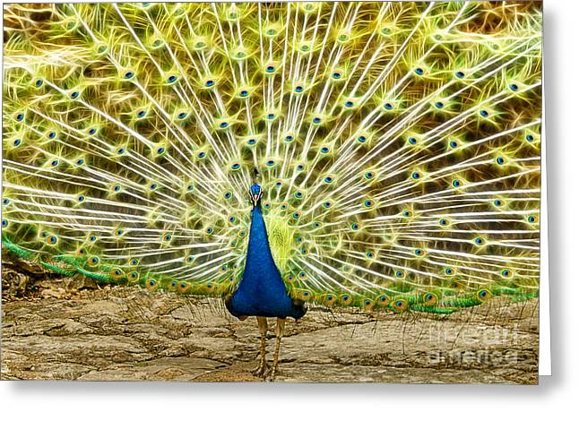 Mayfield Greeting Cards - Electric Peacock Greeting Card by John Kain