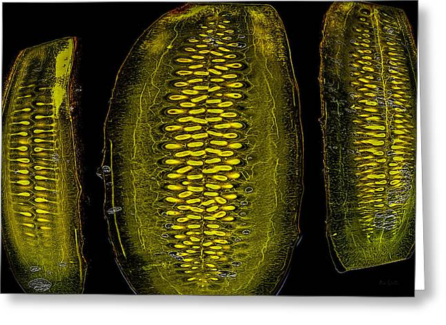 Veggie Greeting Cards - Electric Pickles Greeting Card by Bob Orsillo