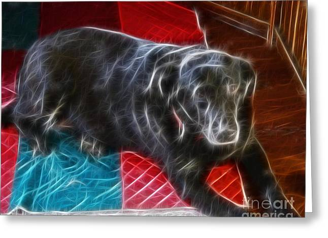 Electrostatic Dog And Blanket Greeting Card by Barbara Griffin