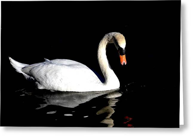 Swans... Greeting Cards - Elegance Greeting Card by Deena Stoddard