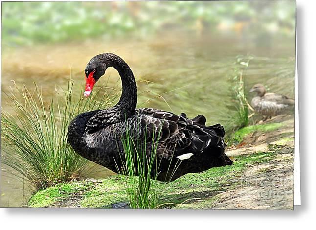 Aquatic Bird Greeting Cards - Elegance in Black Greeting Card by Kaye Menner