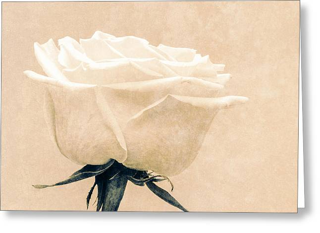 Elegance in white Greeting Card by Wim Lanclus
