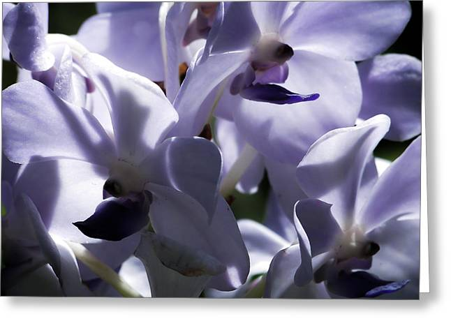 Purple Orchids Greeting Cards - Elegance Greeting Card by Karen Wiles