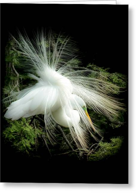 Water Bird Greeting Cards - ELEGANCE of CREATION Greeting Card by Karen Wiles
