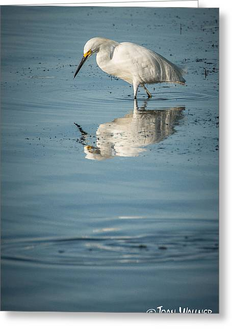 Englewood Greeting Cards - Elegant Egret Greeting Card by Joan Wallner
