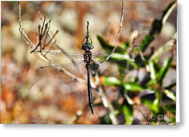 Dragonfly Picture Greeting Cards - Elegant Emerald Greeting Card by Al Powell Photography USA