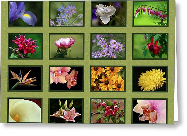 Shelley Myke Greeting Cards - Elegant Flowers Collection Greeting Card by Inspired Nature Photography By Shelley Myke