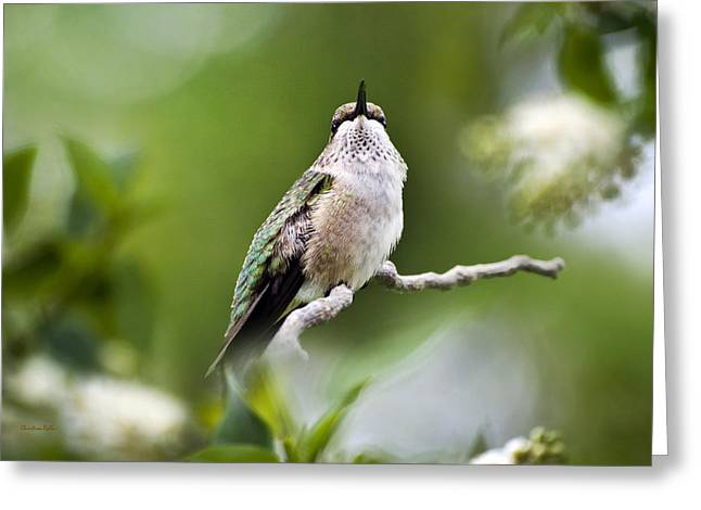 Christina Digital Art Greeting Cards - Elegant Hummingbird Greeting Card by Christina Rollo