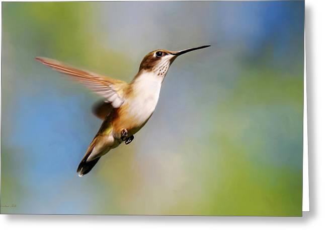 Hovering Greeting Cards - Elegant Hummingbird Journey Greeting Card by Christina Rollo