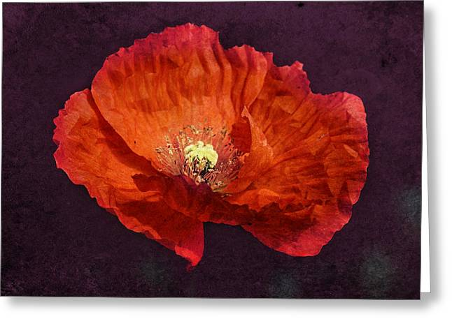 Melanie Lankford Photography Greeting Cards - Elegant Orange Greeting Card by Melanie Lankford Photography
