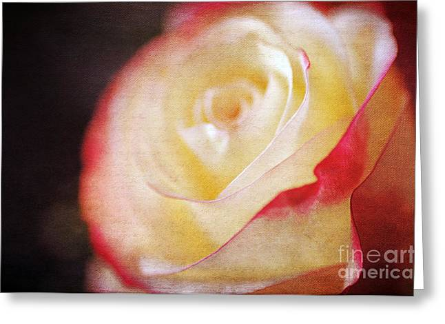 Texture Floral Greeting Cards - Elegant Rose Greeting Card by Darren Fisher