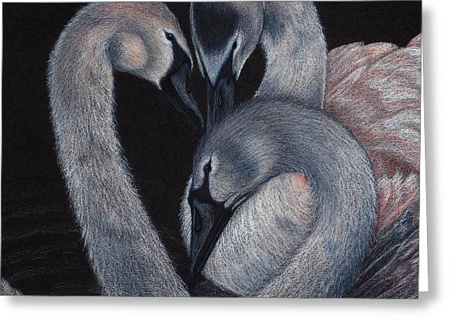 Wild Life Drawings Greeting Cards - Elegant Whispers Greeting Card by Jo Prevost