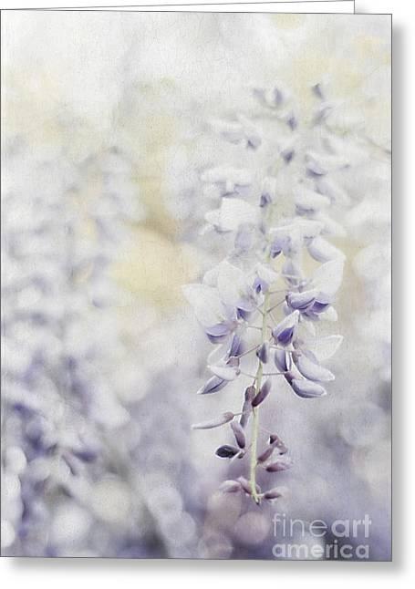 Trellis Greeting Cards - Elegant Wisteria Greeting Card by Darren Fisher