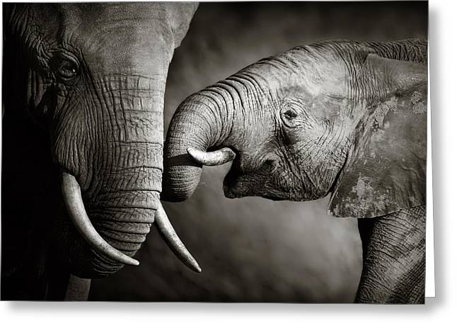 Moody Greeting Cards - Elephant affection Greeting Card by Johan Swanepoel
