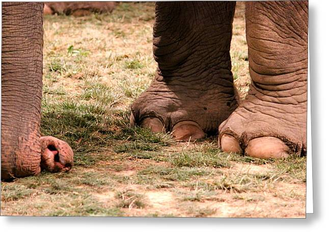 Elephant Greeting Card by Amanda Just