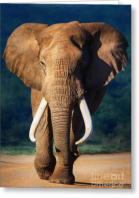Ivory Greeting Cards - Elephant approaching Greeting Card by Johan Swanepoel