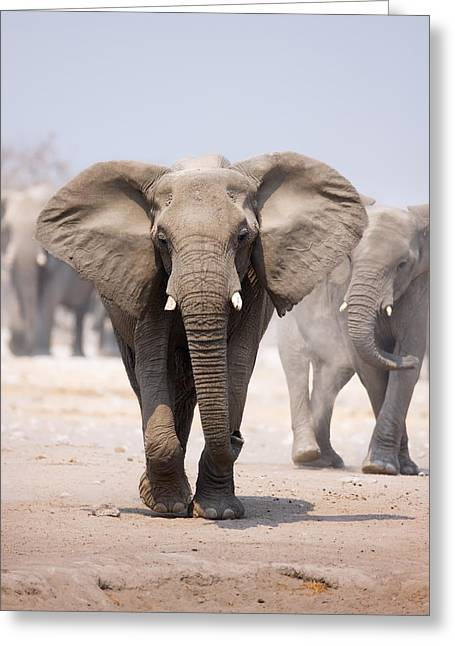 Dusty Blue Greeting Cards - Elephant bathing Greeting Card by Johan Swanepoel