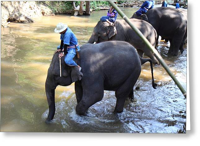 Trainer Greeting Cards - Elephant Baths - Maesa Elephant Camp - Chiang Mai Thailand - 01131 Greeting Card by DC Photographer