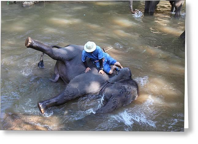Elephant Baths - Maesa Elephant Camp - Chiang Mai Thailand - 011310 Greeting Card by DC Photographer