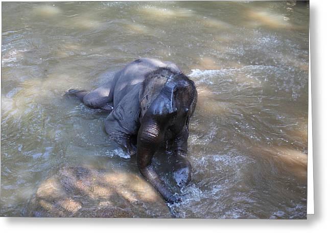 Elephant Baths - Maesa Elephant Camp - Chiang Mai Thailand - 011312 Greeting Card by DC Photographer