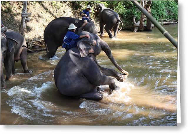 Bathing Photographs Greeting Cards - Elephant Baths - Maesa Elephant Camp - Chiang Mai Thailand - 011315 Greeting Card by DC Photographer