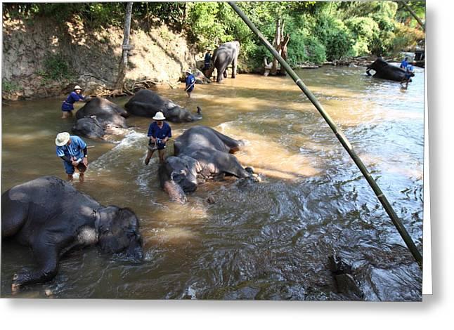 Bath Greeting Cards - Elephant Baths - Maesa Elephant Camp - Chiang Mai Thailand - 011319 Greeting Card by DC Photographer