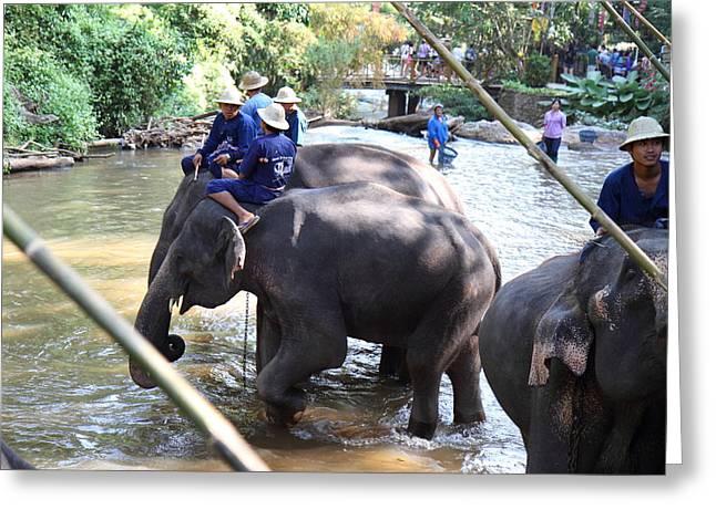 Bathing Photographs Greeting Cards - Elephant Baths - Maesa Elephant Camp - Chiang Mai Thailand - 01132 Greeting Card by DC Photographer