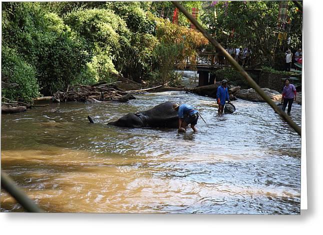 Bath Greeting Cards - Elephant Baths - Maesa Elephant Camp - Chiang Mai Thailand - 011320 Greeting Card by DC Photographer