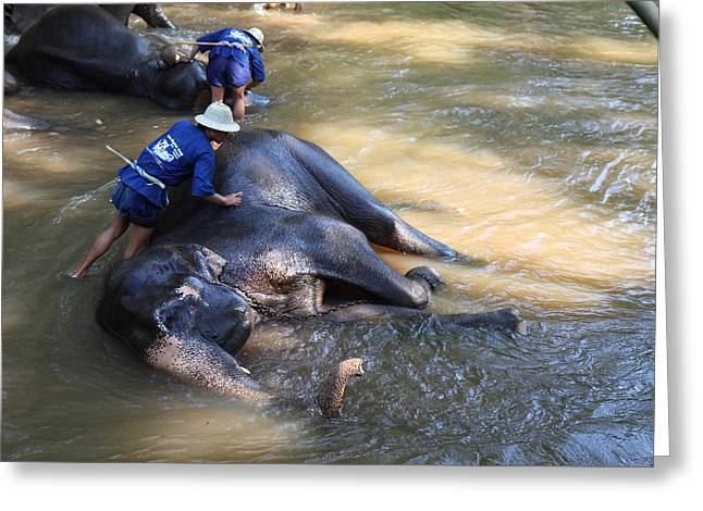Bath Greeting Cards - Elephant Baths - Maesa Elephant Camp - Chiang Mai Thailand - 011321 Greeting Card by DC Photographer