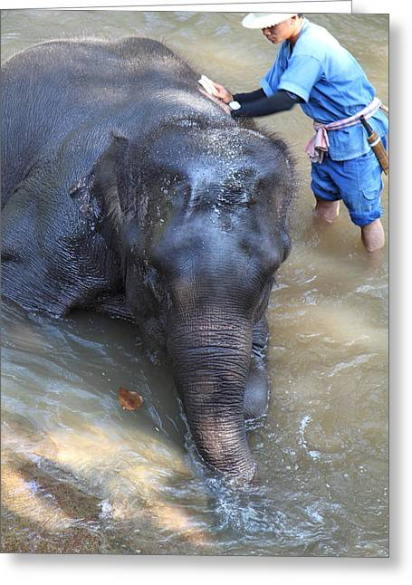 Bathing Greeting Cards - Elephant Baths - Maesa Elephant Camp - Chiang Mai Thailand - 011322 Greeting Card by DC Photographer