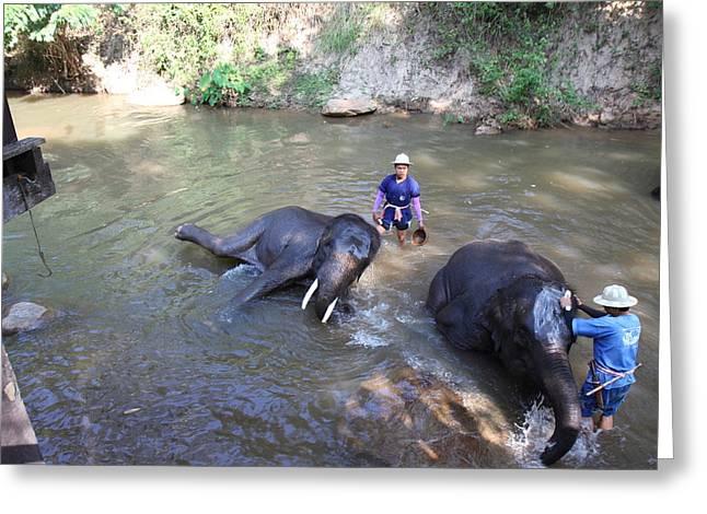 Bath Greeting Cards - Elephant Baths - Maesa Elephant Camp - Chiang Mai Thailand - 011323 Greeting Card by DC Photographer