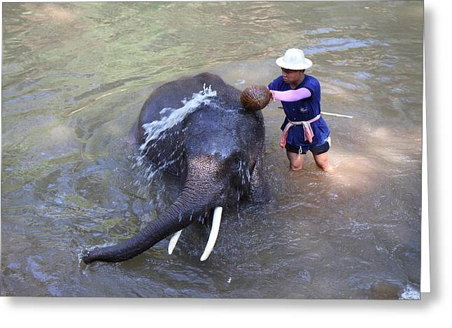 Elephant Baths - Maesa Elephant Camp - Chiang Mai Thailand - 011324 Greeting Card by DC Photographer