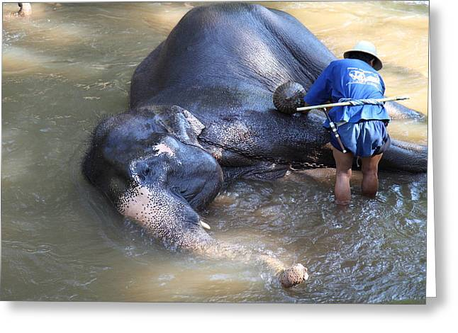 Bathing Greeting Cards - Elephant Baths - Maesa Elephant Camp - Chiang Mai Thailand - 011325 Greeting Card by DC Photographer
