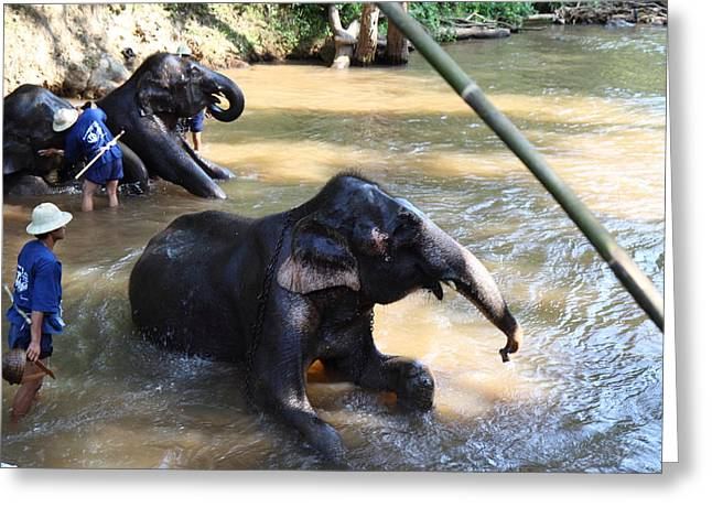Bath Greeting Cards - Elephant Baths - Maesa Elephant Camp - Chiang Mai Thailand - 011326 Greeting Card by DC Photographer
