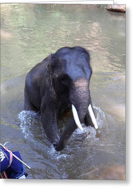 Bathing Greeting Cards - Elephant Baths - Maesa Elephant Camp - Chiang Mai Thailand - 011327 Greeting Card by DC Photographer