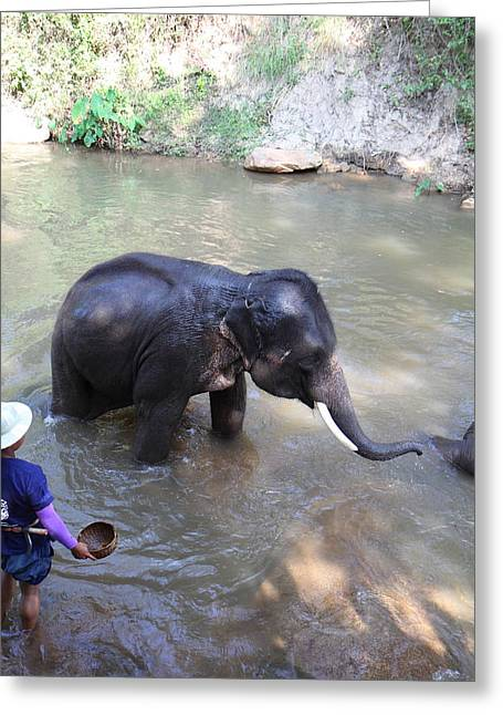 Trainer Greeting Cards - Elephant Baths - Maesa Elephant Camp - Chiang Mai Thailand - 011328 Greeting Card by DC Photographer