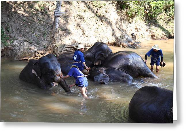 Bathing Greeting Cards - Elephant Baths - Maesa Elephant Camp - Chiang Mai Thailand - 011329 Greeting Card by DC Photographer