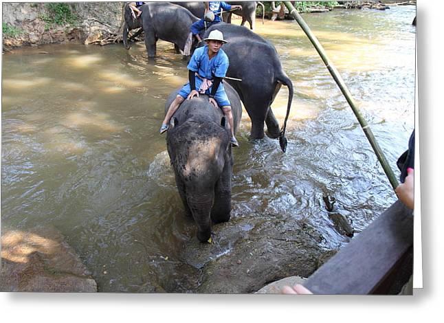 Bathing Greeting Cards - Elephant Baths - Maesa Elephant Camp - Chiang Mai Thailand - 01137 Greeting Card by DC Photographer