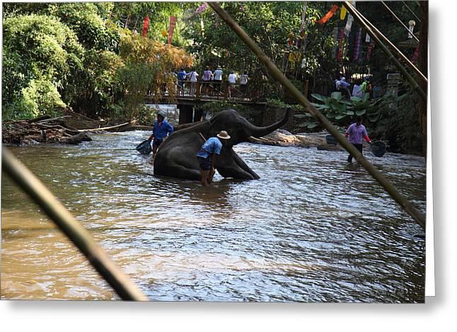 Bathing Greeting Cards - Elephant Baths - Maesa Elephant Camp - Chiang Mai Thailand - 01138 Greeting Card by DC Photographer