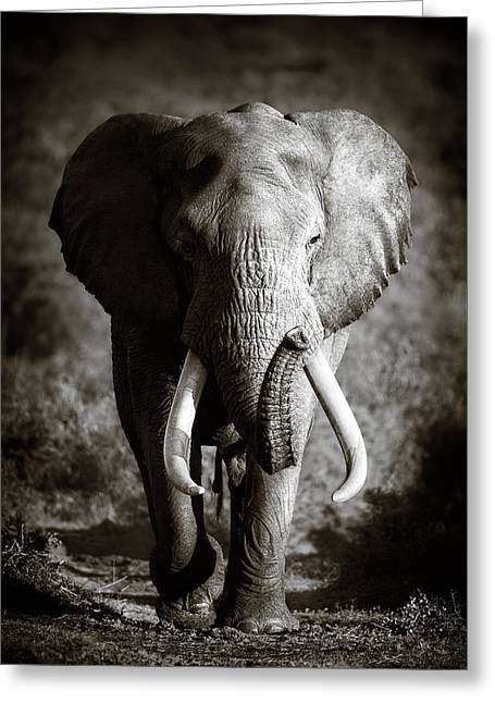 Moody Greeting Cards - Elephant Bull Greeting Card by Johan Swanepoel