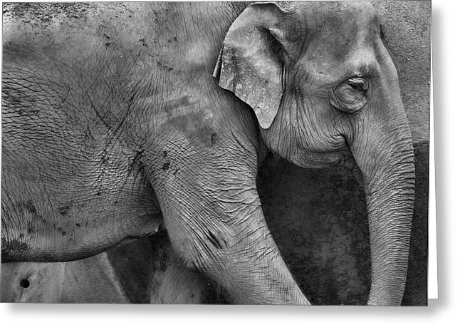 Elephant Greeting Cards - Elephant Details Greeting Card by Dan Sproul