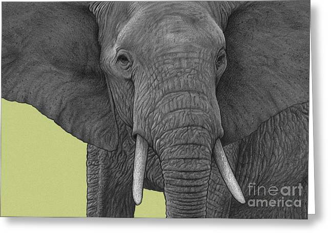 Wild Life Drawings Greeting Cards - Elephant Greeting Card by Dirk Dzimirsky