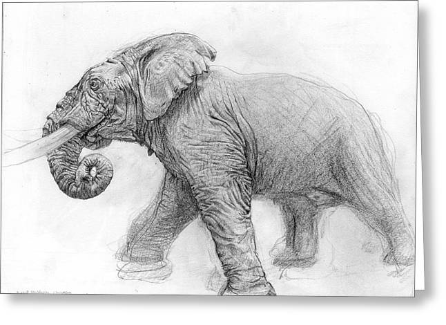 Journal Drawings Greeting Cards - Elephant Drawing Greeting Card by Terry Deroche