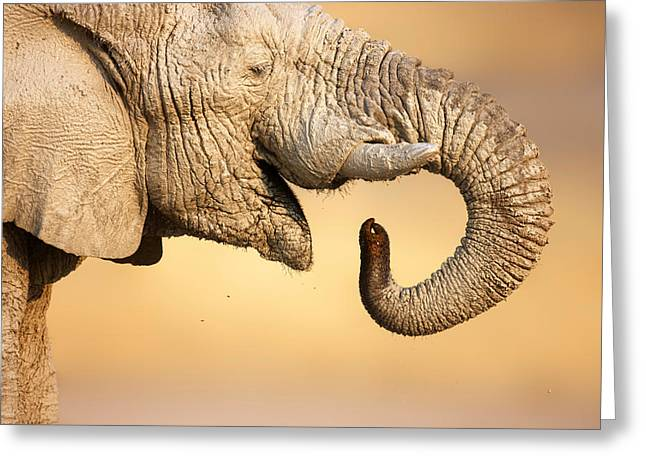 Curl Greeting Cards - Elephant drinking Greeting Card by Johan Swanepoel