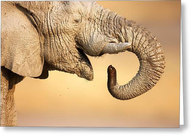 Elephant Drinking Greeting Card by Johan Swanepoel