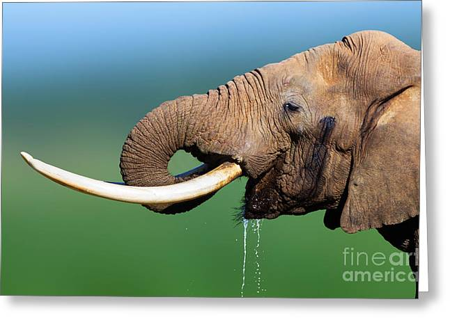 Blue Drip Greeting Cards - Elephant drinking water Greeting Card by Johan Swanepoel