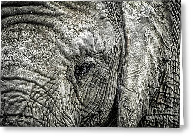 Elephant Greeting Card by Elena Elisseeva