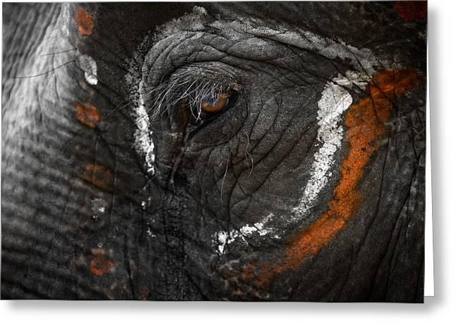 Wildlife Celebration Greeting Cards - Elephant eye Greeting Card by Dutourdumonde Photography