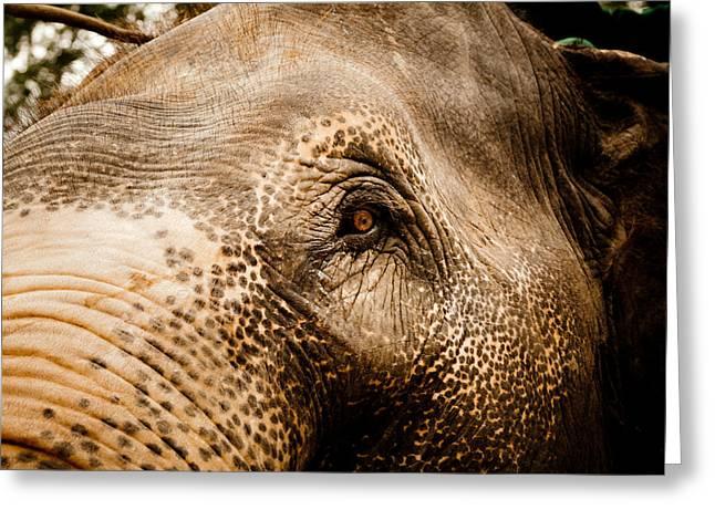 Tibetan Buddhism Greeting Cards - Elephant eye Greeting Card by Raimond Klavins
