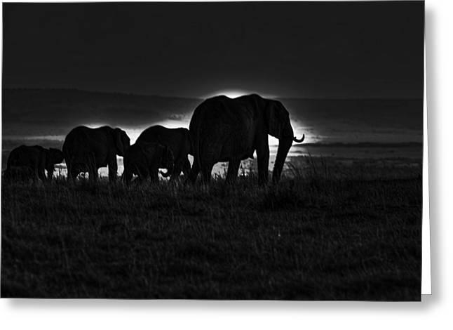Moran Greeting Cards - Elephant Family Greeting Card by Aidan Moran